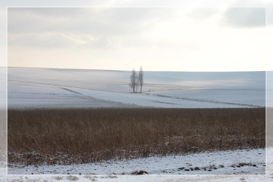 Winter2013