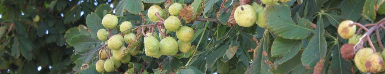 Obst- und Gartenbauverein Oberdolling e. V.
