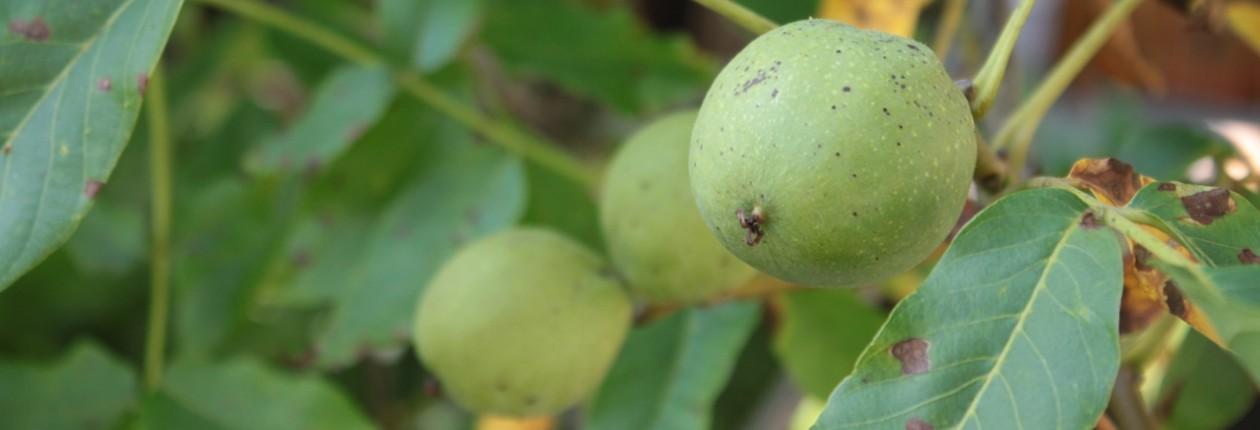 Obst- und Gartenbauverein Oberdolling